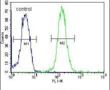 ZBTB10 Antibody (PA5-24073)