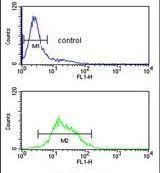 ZBTB2 Antibody (PA5-13708)