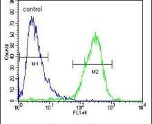 ZC3H12A Antibody (PA5-24458)