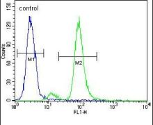 ZIK1 Antibody (PA5-24079)