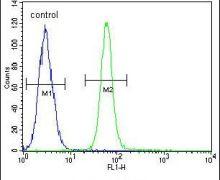 ZMYND10 Antibody (PA5-25732)