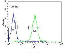 ZNF169 Antibody (PA5-24010)