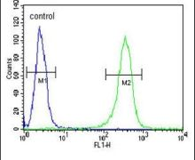 ZNF473 Antibody (PA5-26756)