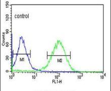 ZNF202 Antibody (PA5-26777)