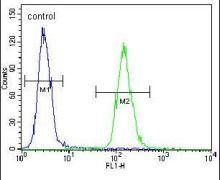 ZNF536 Antibody (PA5-24338)