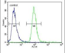 ZSWIM6 Antibody (PA5-24130)