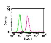 IKK alpha Antibody (MA5-16157)