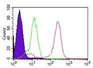 IKK gamma Antibody (MA1-41219)