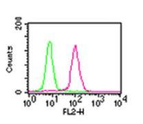 NFkB p65 Antibody (MA5-16160)