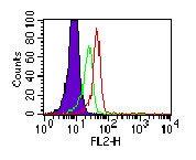 TLR3 Antibody (MA5-16188)