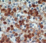 TLR9 Antibody (MA5-16178)