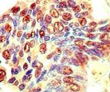 eIF3j Antibody (PA5-23312)