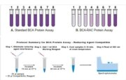 Comparison of the effect of reducing agents on Standard BCA and BCA-RAC protein assays