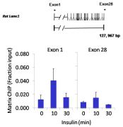 c-Jun Antibody (PA1-833)