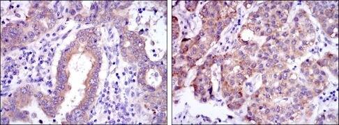 c-Rel Antibody (MA5-15859)