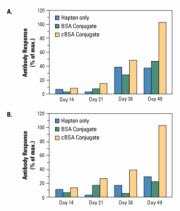 Higher and longer-sustained immune response with Imject Cationized BSA