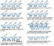 Protocol summary for immunoprecipitation using Protein G coated plates