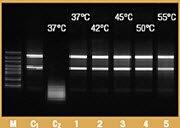 Thermostability of RiboLock RNase Inhibitor