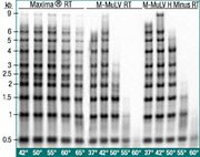 High yields of cDNA over a broad temperature range