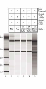 Complete removal of divalent cations with the TURBO DNA-free™ Inactivation Reagent.