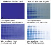 Comparison of a traditional homemade coomassie gel stain reagent and the GelCode Blue Stain Reagent