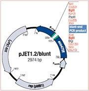 pJET1.2/blunt vector map